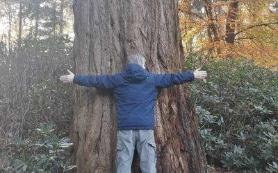 Heemkunde – Sequoia boom (deel1)