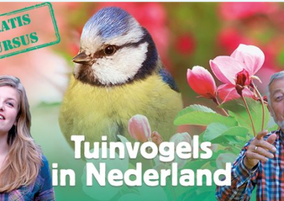 Vogelcursussen – Vogels in Nederland